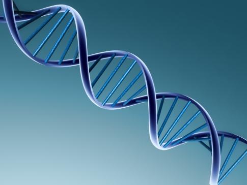 ADN (stock.xchng)